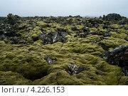 Мховое поле. Стоковое фото, фотограф Denis Chernega / Фотобанк Лори