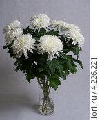 Букет белых хризантем. Стоковое фото, фотограф Петров Сергей / Фотобанк Лори