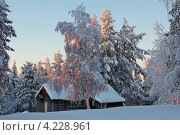 Деревья и домик с подсветкой (2008 год). Стоковое фото, фотограф Катерина Берг / Фотобанк Лори
