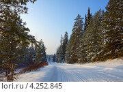 Заснеженная дорога вдоль соснового леса. Стоковое фото, фотограф Владимир Аликин / Фотобанк Лори