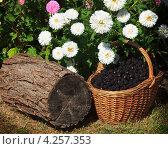 Ягоды ежевики в плетеной корзине на фоне цветов. Стоковое фото, фотограф Николай Овечко / Фотобанк Лори