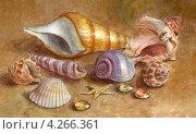 Морские раковины. Акварельный рисунок. Стоковая иллюстрация, иллюстратор Ковалева Наталья / Фотобанк Лори