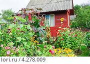Купить «Дачный участок», эксклюзивное фото № 4278009, снято 17 августа 2012 г. (c) Алёшина Оксана / Фотобанк Лори