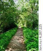 Тропинка в летнем лесу. Стоковое фото, фотограф kraser / Фотобанк Лори