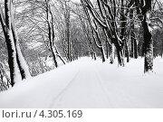 Купить «В зимнем парке», фото № 4305169, снято 21 марта 2019 г. (c) Сергей Куров / Фотобанк Лори