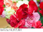 Купить «Букет гвоздик», фото № 4317361, снято 31 декабря 2012 г. (c) Morgenstjerne / Фотобанк Лори