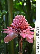 Экзотический цветок. Стоковое фото, фотограф Никита Шауберт / Фотобанк Лори
