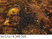 Мох на чёрной почве в тундре. Стоковое фото, фотограф Наталия Давидович / Фотобанк Лори