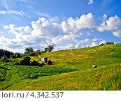 Летний сельский пейзаж. Стоковое фото, фотограф kraser / Фотобанк Лори