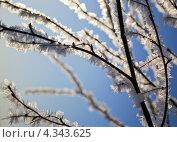 Зимнее противостояние. Стоковое фото, фотограф konstantin tatonkin / Фотобанк Лори