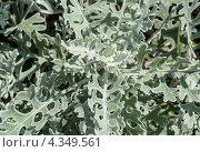 Купить «Текстура - зеленая трава», фото № 4349561, снято 14 июля 2011 г. (c) Виктор Пелих / Фотобанк Лори