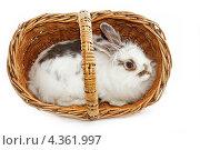 Белый кролик сидит в плетёной корзине. Стоковое фото, фотограф CHERKAUSKAS VIKTOR / Фотобанк Лори