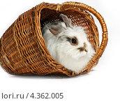 Пасхальный кролик. Стоковое фото, фотограф CHERKAUSKAS VIKTOR / Фотобанк Лори