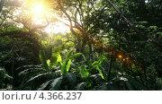 В джунглях Центральной Америки. Гондурас (2013 год). Стоковое видео, видеограф Soft light / Фотобанк Лори