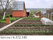 Дачный домик и ухоженный огород. Стоковое фото, фотограф Юрий Морозов / Фотобанк Лори