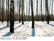 Купить «Зимний пейзаж. Берёзовая роща», эксклюзивное фото № 4372397, снято 25 февраля 2013 г. (c) Игорь Низов / Фотобанк Лори