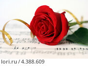 Красная роза. Стоковое фото, фотограф Марат Сафаров / Фотобанк Лори