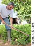 Купить «Мужчина работает в огороде», фото № 4401801, снято 27 июля 2010 г. (c) Phovoir Images / Фотобанк Лори
