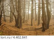 Лес в тумане. Стоковое фото, фотограф Loboda Dmitriy / Фотобанк Лори