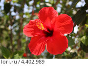 Красный цветок. Стоковое фото, фотограф Дарья Фролова / Фотобанк Лори