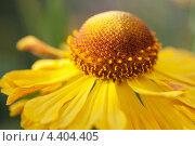 Желтый цветок. Стоковое фото, фотограф Наталья Наточина / Фотобанк Лори
