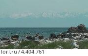 Байкальские тюлени. Стоковое видео, видеограф Максим Марков / Фотобанк Лори