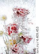 Купить «Замерзшие цветы во льду», фото № 4409453, снято 6 января 2013 г. (c) Алексей Сергеев / Фотобанк Лори