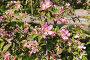Цветущие ветки яблони, эксклюзивное фото № 4418213, снято 8 мая 2012 г. (c) Юрий Морозов / Фотобанк Лори