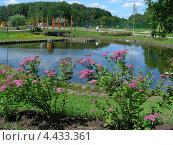 Купить «Терлецкие пруды, Терлецкий лесопарк, Москва», эксклюзивное фото № 4433361, снято 30 июня 2009 г. (c) lana1501 / Фотобанк Лори