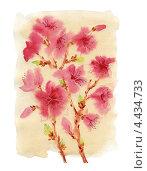 Купить «Рисунок акварелью. Цветущий миндаль», иллюстрация № 4434733 (c) Ирина Чекмарева / Фотобанк Лори