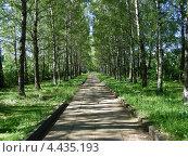 Купить «Березовая аллея в парке», эксклюзивное фото № 4435193, снято 30 июня 2010 г. (c) lana1501 / Фотобанк Лори