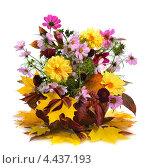 Купить «Осенний букет с георгинами и кленовыми листьями», фото № 4437193, снято 1 октября 2011 г. (c) Литова Наталья / Фотобанк Лори