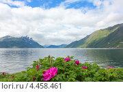Норвежский фьорд с цветком на переднем плане (2012 год). Стоковое фото, фотограф Dmitry Burlakov / Фотобанк Лори