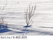 Деревце. Стоковое фото, фотограф Денис Васильев / Фотобанк Лори