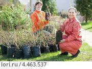 Купить «Две женщины выбирают саженцы садовых растений», фото № 4463537, снято 2 мая 2012 г. (c) Яков Филимонов / Фотобанк Лори