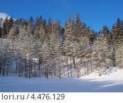 Купить «Зимний лес», фото № 4476129, снято 9 марта 2013 г. (c) Алексей Кокоулин / Фотобанк Лори