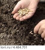 Купить «Детские руки сеют семена в землю», фото № 4484701, снято 31 мая 2010 г. (c) Чепко Данил / Фотобанк Лори