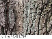 Купить «Фактура коры дуба скального», эксклюзивное фото № 4489797, снято 9 апреля 2013 г. (c) Ната Антонова / Фотобанк Лори