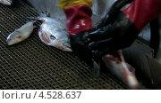 Купить «Рыбу моют на рыбной фабрике», видеоролик № 4528637, снято 14 ноября 2010 г. (c) DPS / Фотобанк Лори
