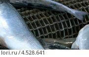 Купить «Рыба на конвейерной ленте», видеоролик № 4528641, снято 14 ноября 2010 г. (c) DPS / Фотобанк Лори