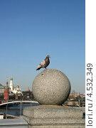 Купить «Сизый голубь на каменном шаре. Патриарший мост, Москва. Вид на Кремль», эксклюзивное фото № 4532349, снято 13 апреля 2013 г. (c) Щеголева Ольга / Фотобанк Лори