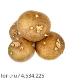 Купить «Пророщенный картофель», фото № 4534225, снято 31 марта 2013 г. (c) Игорь Веснинов / Фотобанк Лори