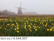 Купить «Голландский весенний пейзаж с мельницей, туманом и цветочными полями», фото № 4544997, снято 11 апреля 2013 г. (c) Виктория Катьянова / Фотобанк Лори