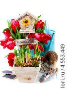 Купить «Весенние цветы в горшочках и инструменты», фото № 4553449, снято 24 марта 2013 г. (c) Наталия Кленова / Фотобанк Лори