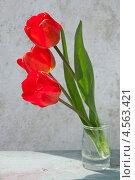 Три красных тюльпана. Стоковое фото, фотограф Короленко Елена / Фотобанк Лори