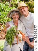 Купить «Пожилая счастливая пара с урожаем овощей в летнем саду», фото № 4564377, снято 4 ноября 2010 г. (c) Wavebreak Media / Фотобанк Лори