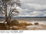 Купить «Ранняя весна в Ленинградской области», фото № 4569297, снято 27 апреля 2013 г. (c) Юлия Бабкина / Фотобанк Лори
