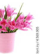 Красивые розовые тюльпаны в ведре. Стоковое фото, фотограф Марина Сапрунова / Фотобанк Лори