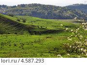 Весенний пейзаж, горы Ставрополья. Стоковое фото, фотограф Синенко Юрий / Фотобанк Лори