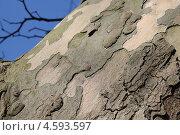 Купить «Фактура коры платана клёнолистного, происхождение вида - Англия, около 1640 год», эксклюзивное фото № 4593597, снято 5 мая 2013 г. (c) Ната Антонова / Фотобанк Лори